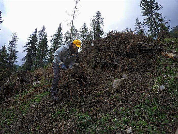Upratovanie lesa od popadaných stromov na vysokohorskom projekte v Alpách