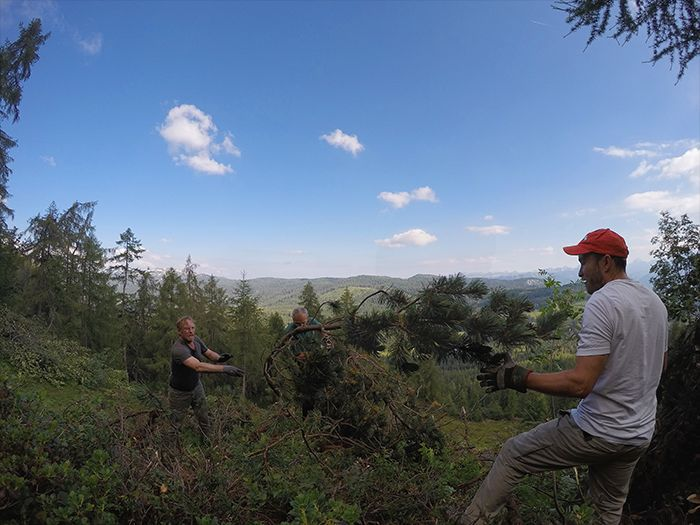 Dobrovoľníci pomáhajú čistiť les od popadaných stromov v Alpách v rámci dobrovoľníckeho projektu