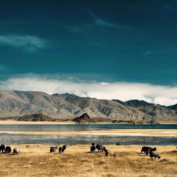 mongolia_opt