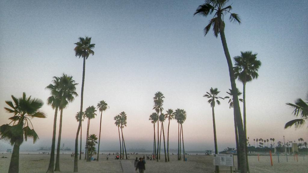 Vysoké palmy pri západe slnka na Santa Monica v Los Angeles