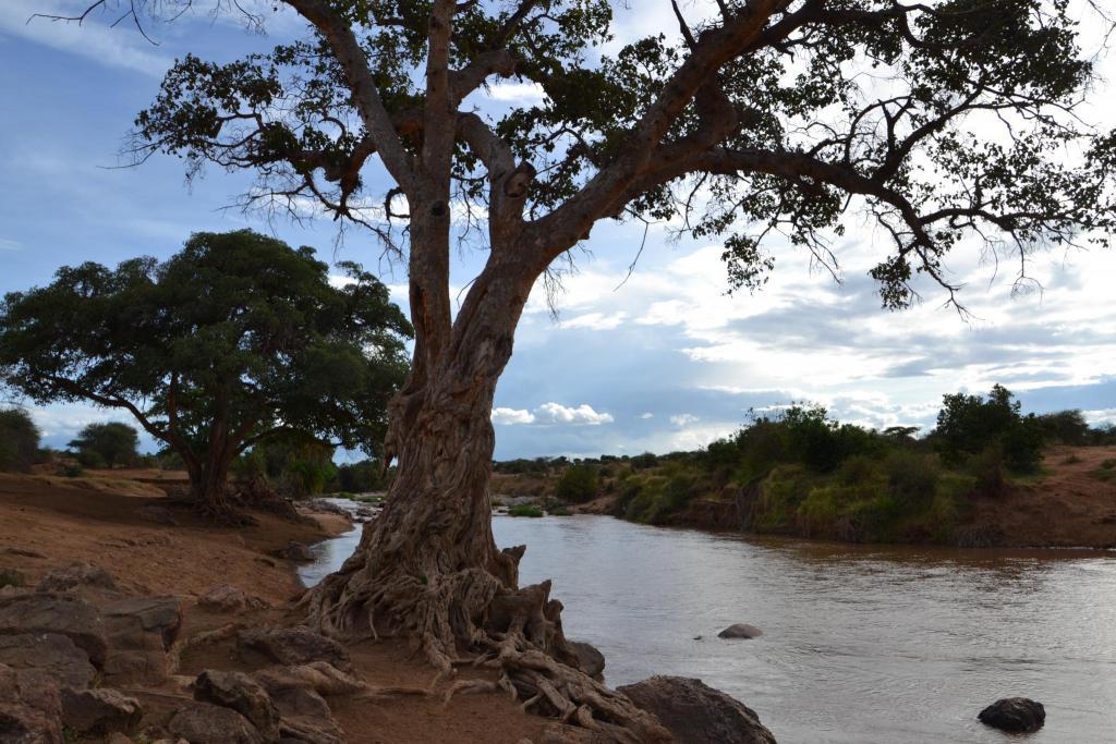 Africká príroda