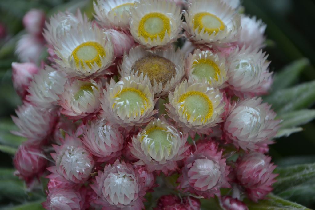 Stanislav Kaľavský - kvety pod Mount Kenya