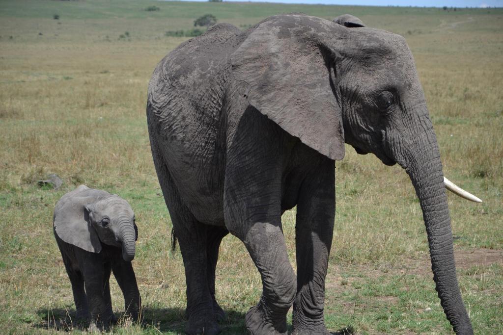 Stanislav Kalavsky - slonica s mláďaťom v africkej stepi